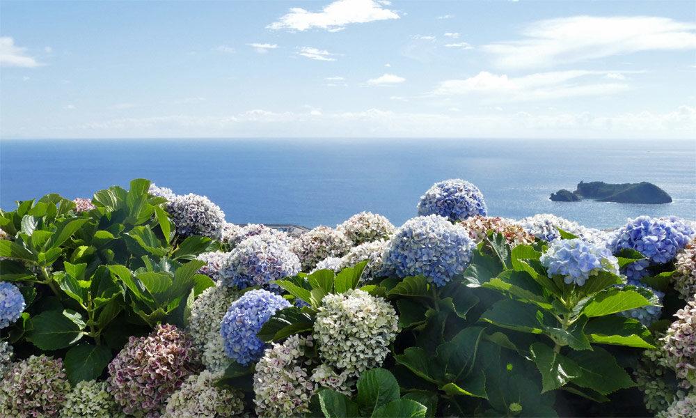 Azoren Blumen und Meer