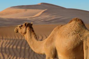 Wüste mit Costa entdecken. Foto: Costa Kreuzfahrten