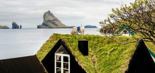 Grüne Dächer und Schafe auf den Färöer Inseln. Foto: Visit Faroe Islands