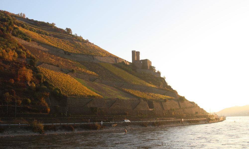 Weinberg und Burgruine am Rhein bei Rüdesheim