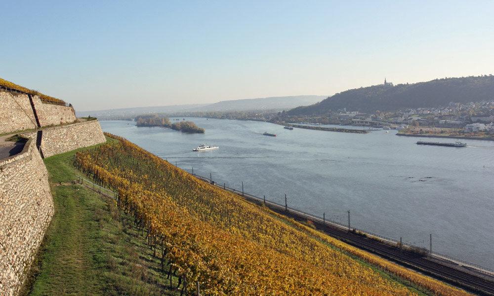 Weinberge am Rhein in Rüdesheim