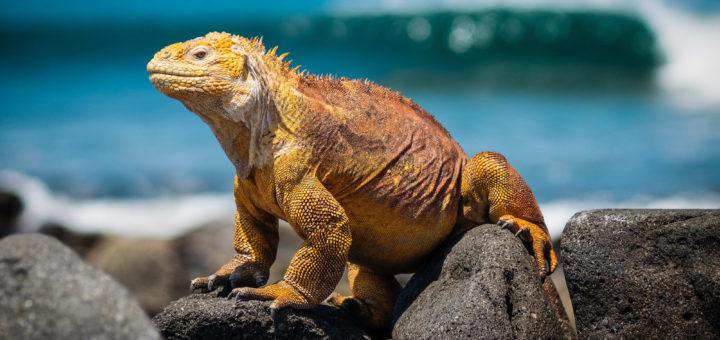 Galapagos Inseln, Ecuador
