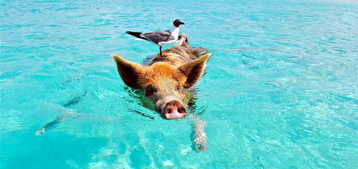 Yeah! Schwein gehabt und Kreuzfahrt gewonnen
