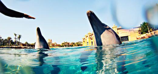 Dolphin Bay in Dubai. Foto: MSC Kreuzfahrten