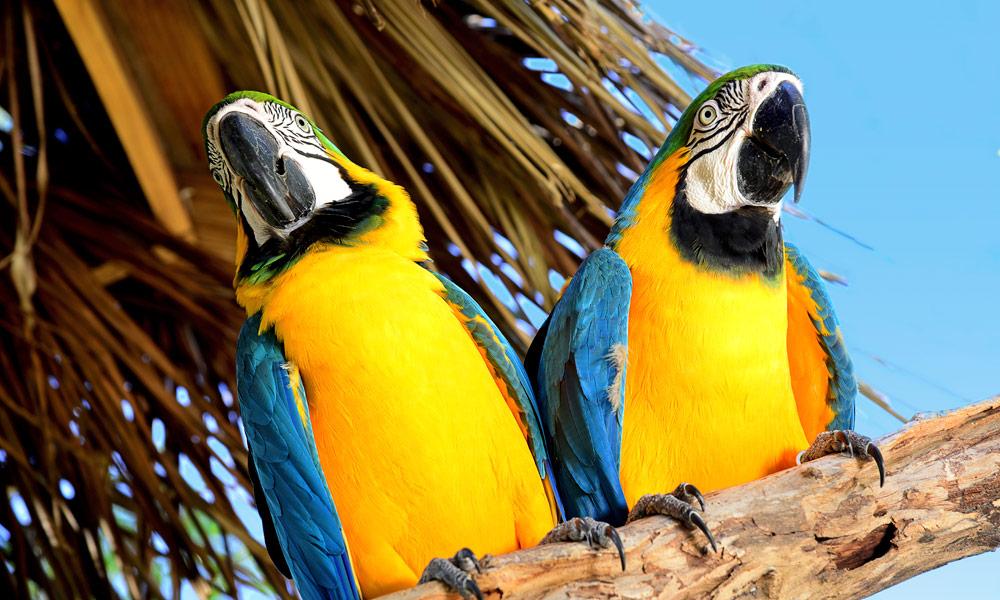 MSC Kreuzfahrten auf den Cayman Islands. Foto: MSC Cruises