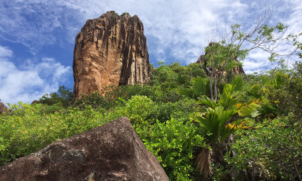 Seychellen Mangrovenwald