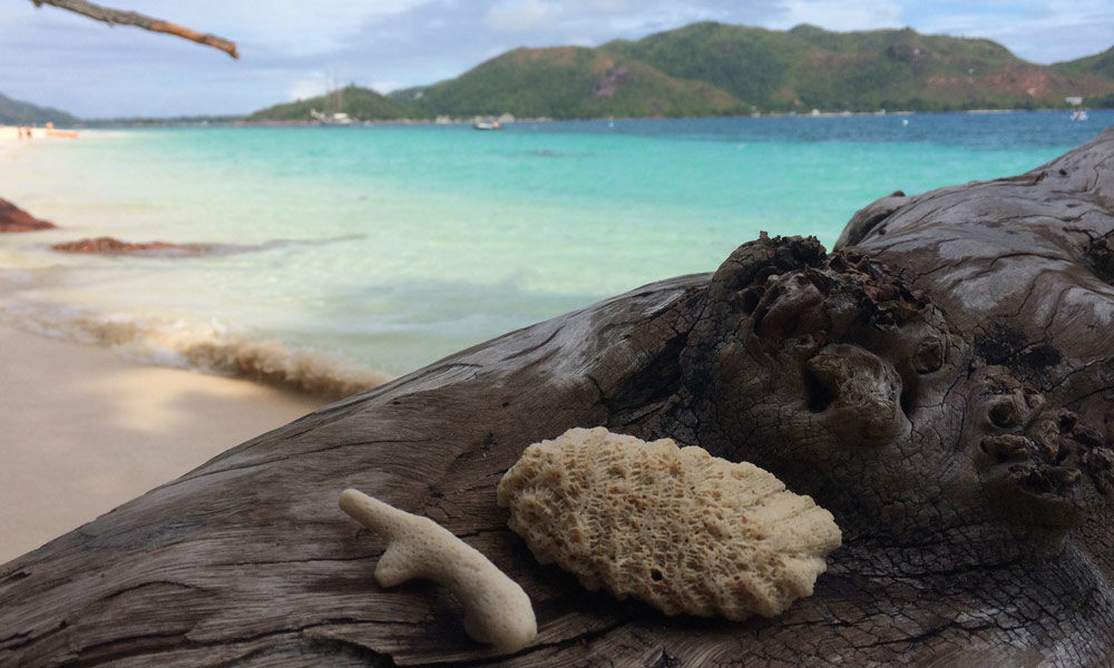 Seychellen Strandgut